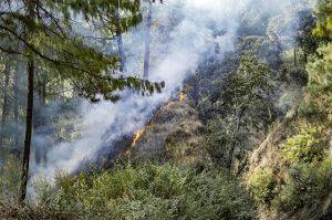 Wildfire Prevention in Olympia, WA