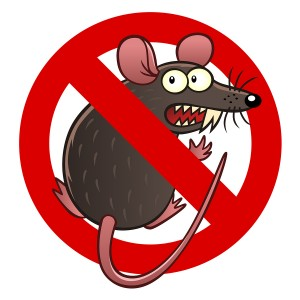 Prevent Rodent Damage in Olympia, WA