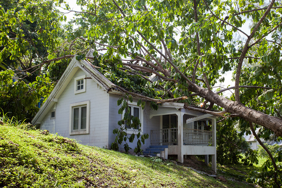 How to deal with a fallen tree in Olympia, WA