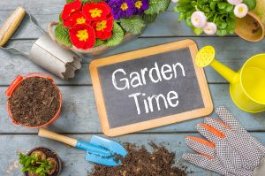 How to prepare a home garden in Olympia, WA